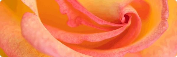 600x194-rose-annehmen_03